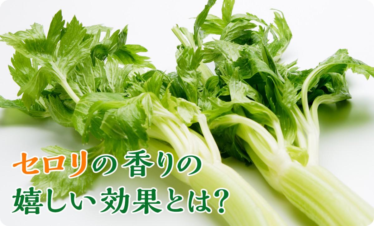 celery_1260px_2