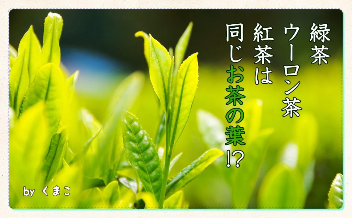 緑茶・ウーロン茶・紅茶は同じお茶の葉