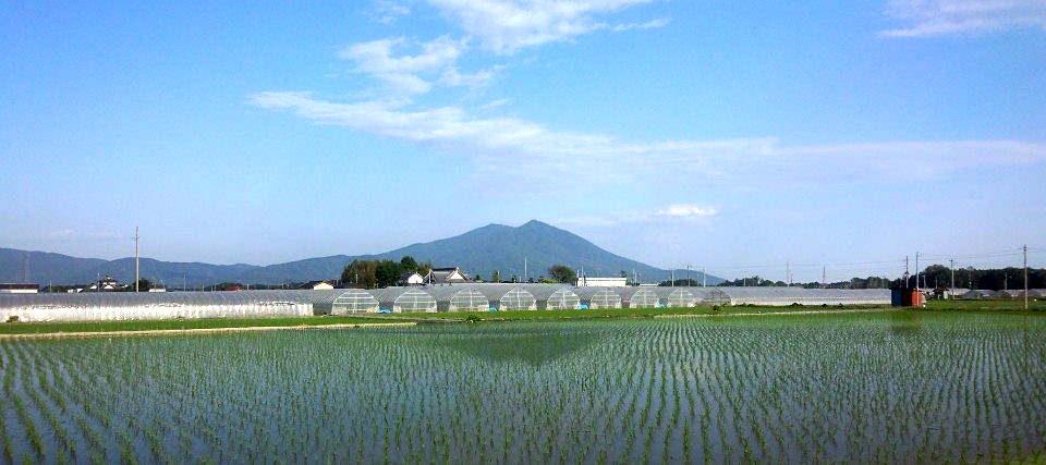 田植え体験 茨城県大嶋農場×ごはん生活研究所