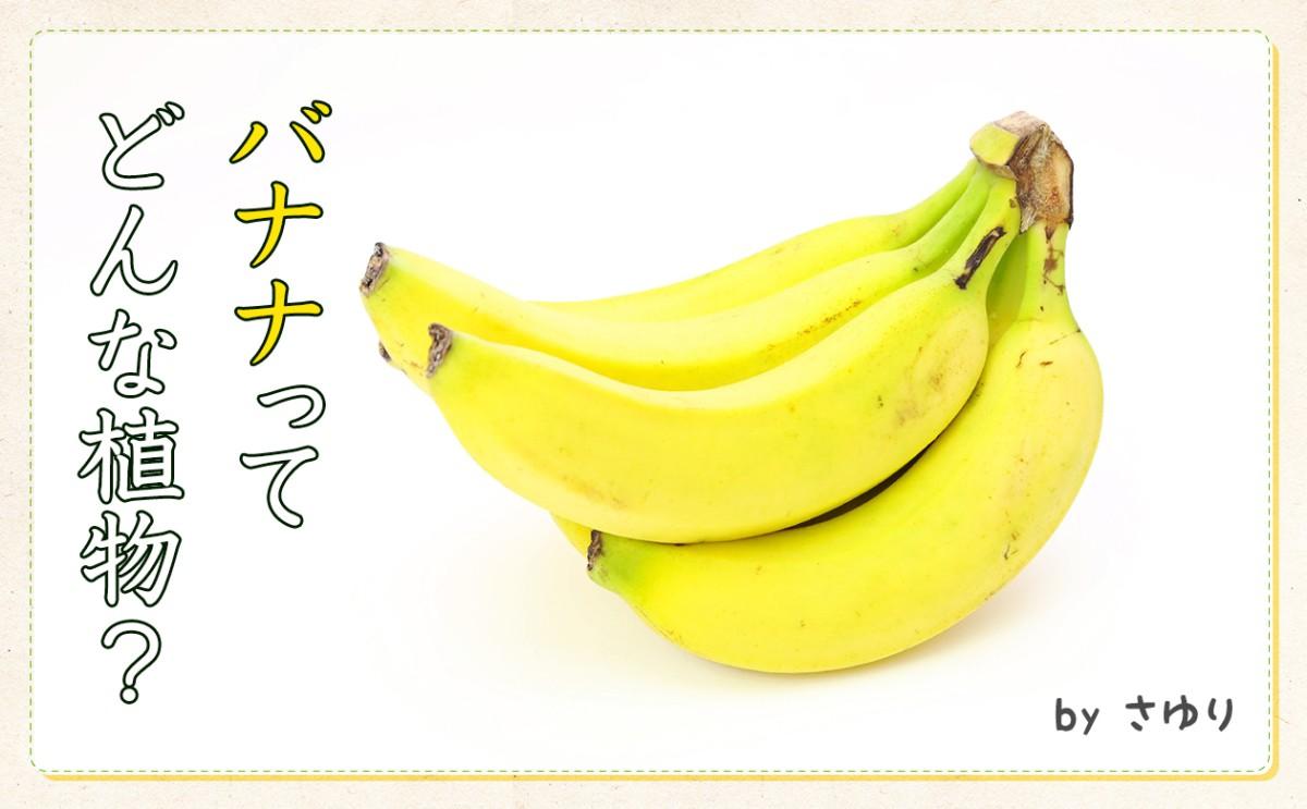 〈食育まめ知識〉バナナシリーズその1「バナナの生態」