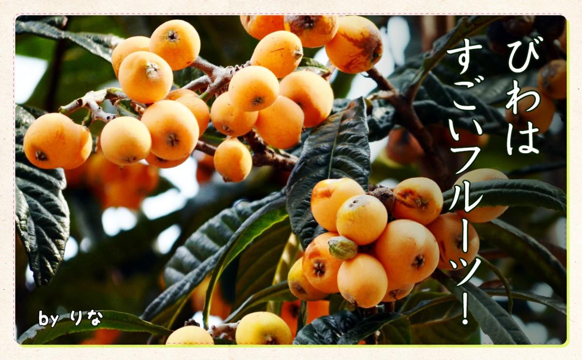 〈食育まめ知識〉びわはすごいフルーツ!!