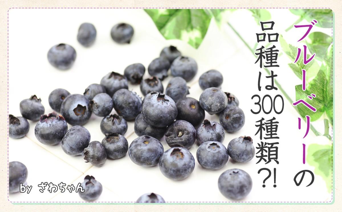 〈食育まめ知識〉ブルーベリーは300種類!!!