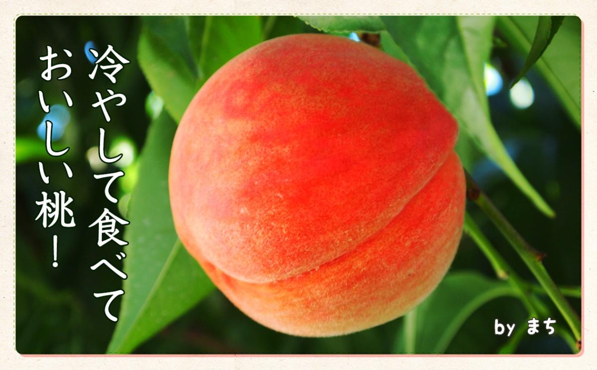 〈食育まめ知識〉冷やして食べておいしい桃!