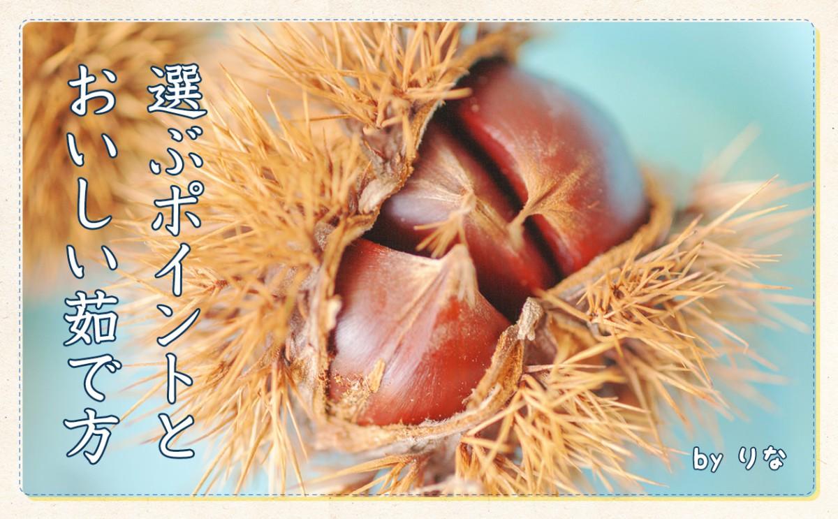〈食育まめ知識〉秋の味覚『栗』