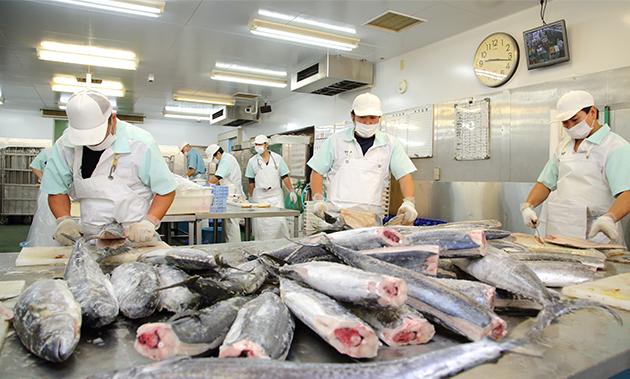 同工場では毎日、10人以上の職人によって、鮭やさわら、カジキなど約10種類の魚の切身約2万3000枚がつくられています。