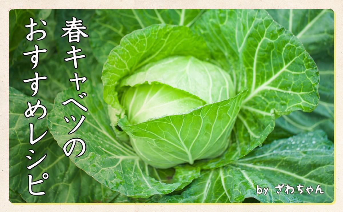 春キャベツのおすすめレシピ!