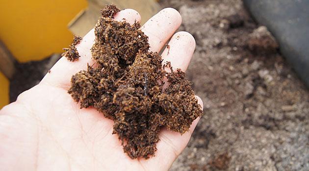 栄養満点の土にはミミズや微生物がいっぱいいました。
