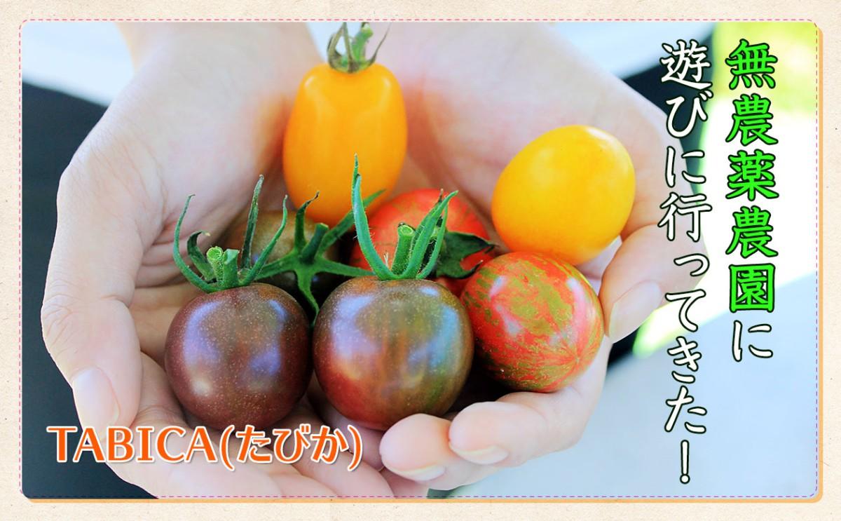 おいしい野菜を求め無農薬農園に行ってきました!