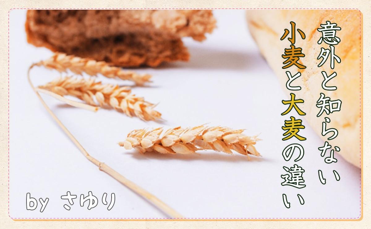 「コムギ」「オオムギ」麦の世界
