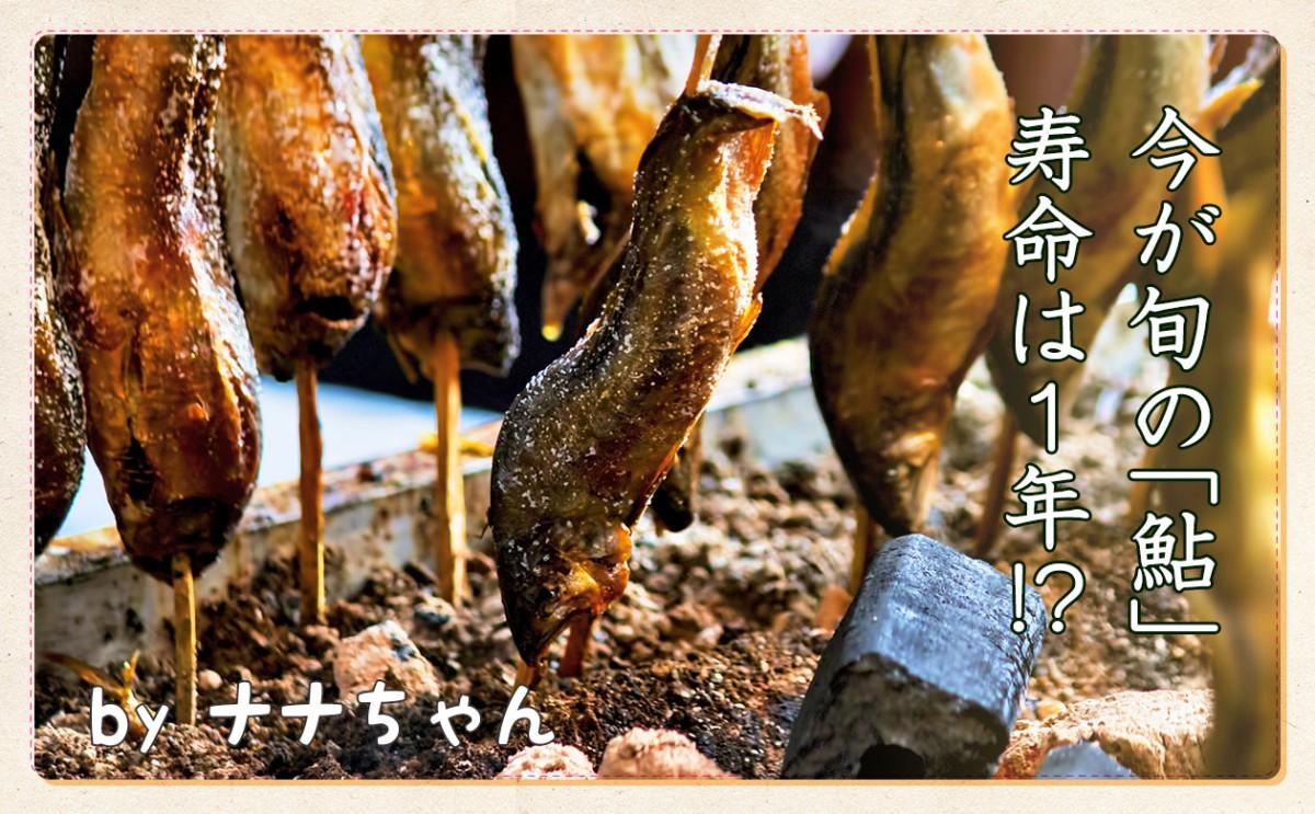 旬の「鮎」寿命は1年?!