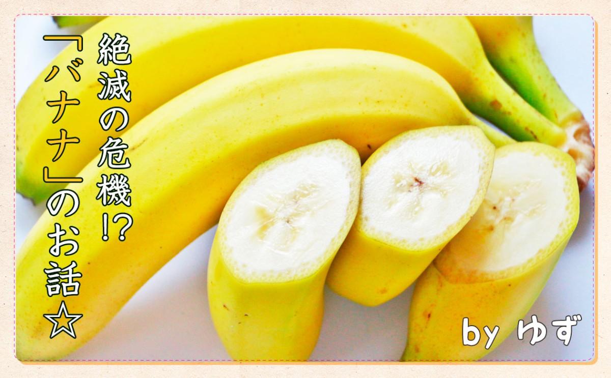 今はバナナ戦国時代!そんなバナナ~!?