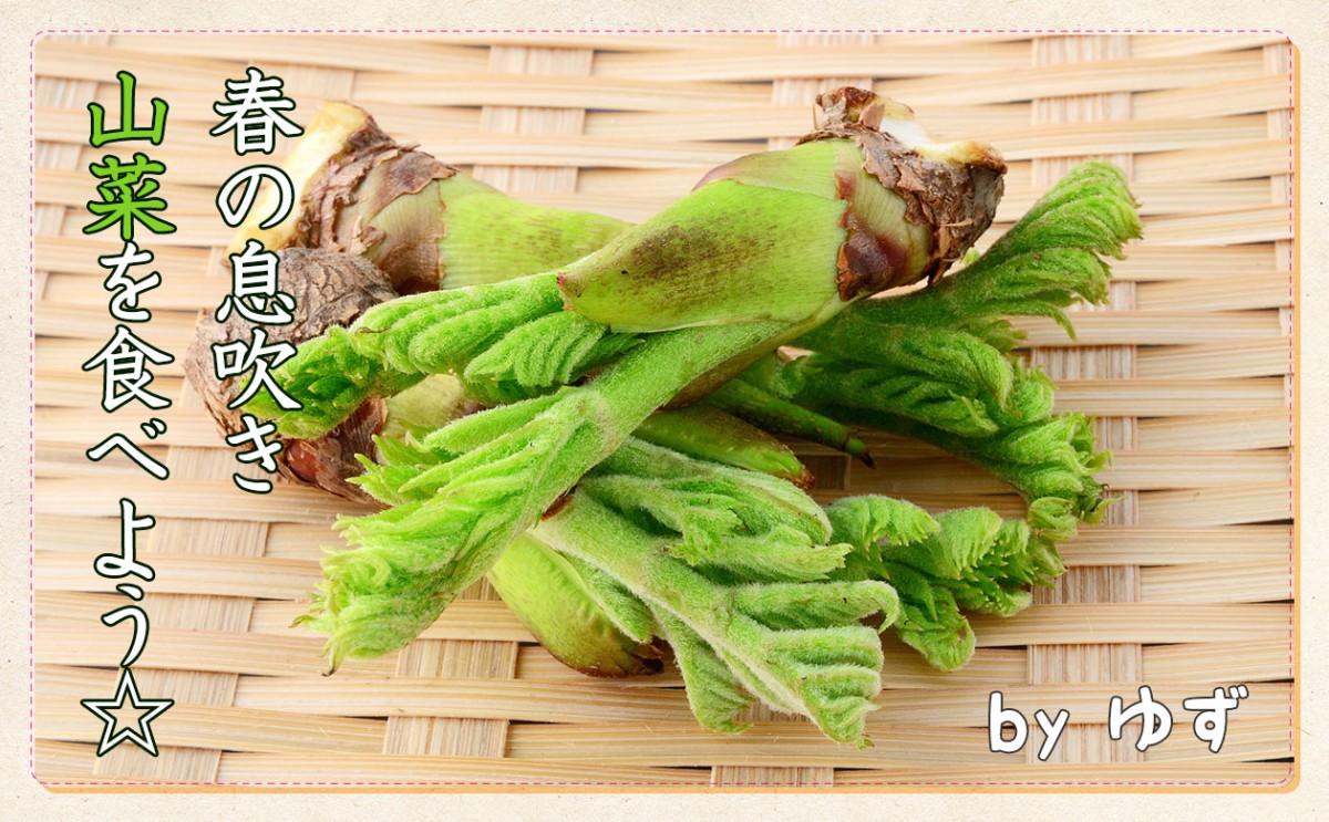 春の息吹き「山菜」を食べてみよう!