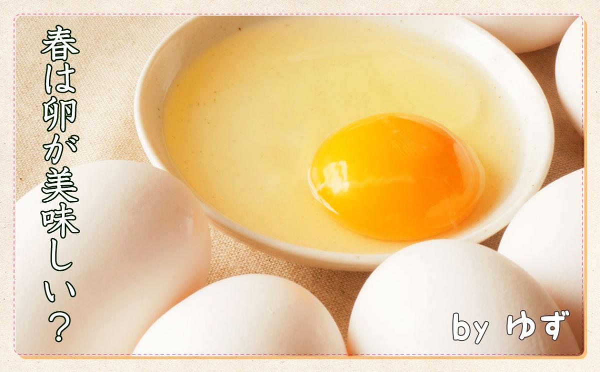 春は卵が美味しい!?