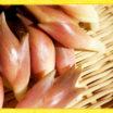 日本のハーブ豆知識②