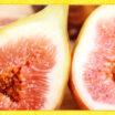 プチプチ食感がクセになる!「イチジク」が美味しい季節です☆