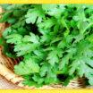 鍋はもちろん、生でもおいしい!ほろにが野菜「春菊」を食べよう!!
