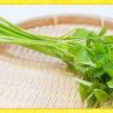 春の七草でおなじみの野菜「せり」のお話。