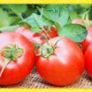 かつて毒と言われていた…!?トマトの大躍進!