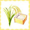 何気なく食べているお米、一体いつから食べられているの?